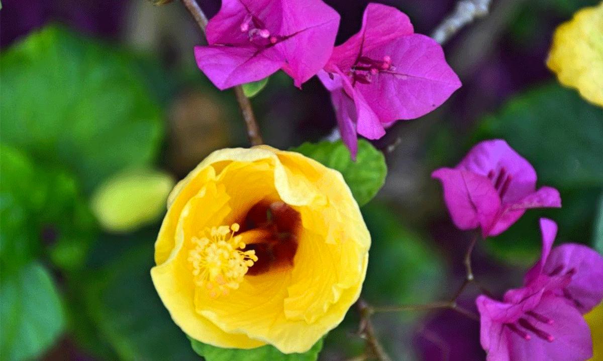 giardino-ilbiviere