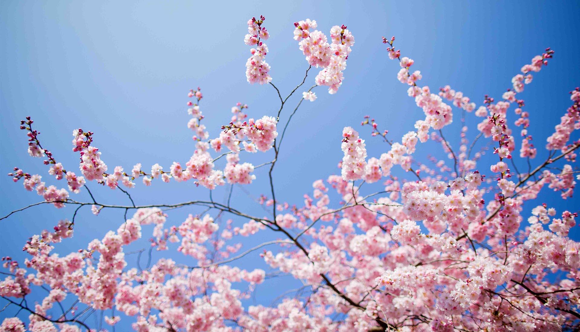 Incontro di Primavera